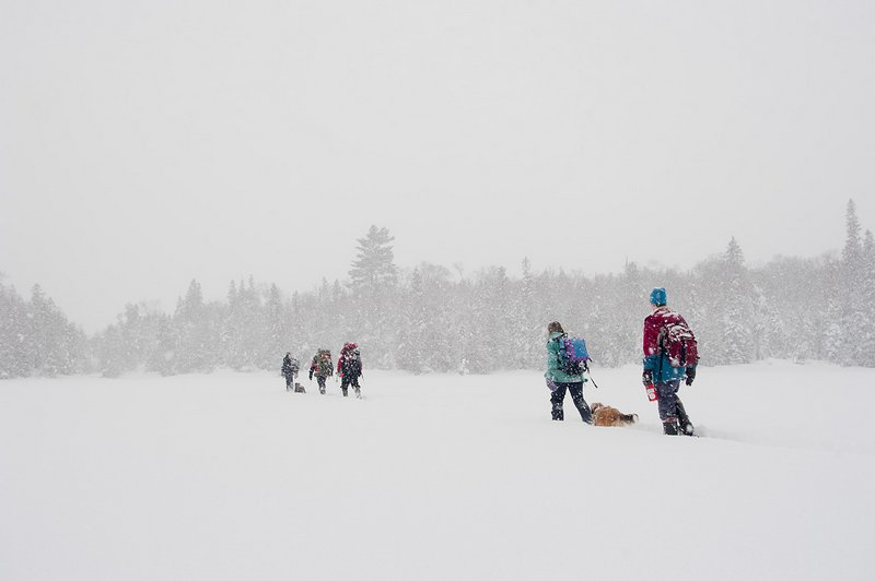Snowshoe group in winter wilderness