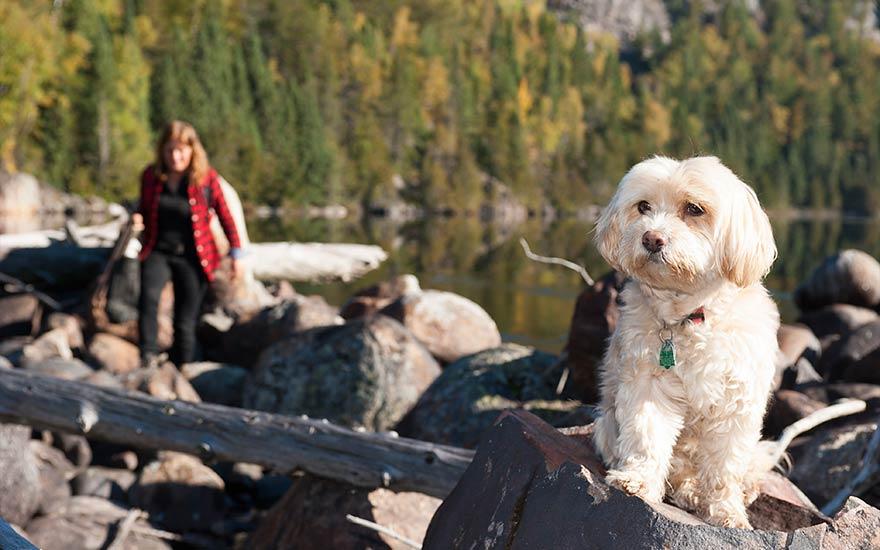 dog-photography-james-smedley